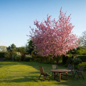 Outdoor garden with blossom tree
